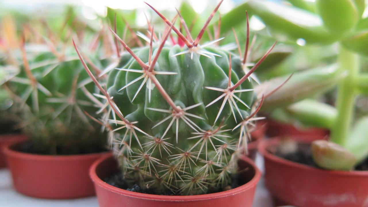https://www.meraflor.com/wp-content/uploads/2020/05/cactacee-e-succulente-1280x720.jpg