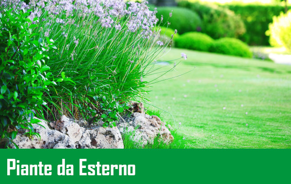 https://www.meraflor.com/wp-content/uploads/2021/04/piante-da-estrno.jpeg