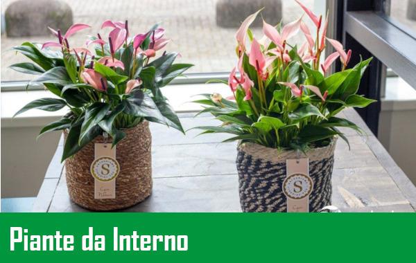 https://www.meraflor.com/wp-content/uploads/2021/05/piante-da-interno.jpeg